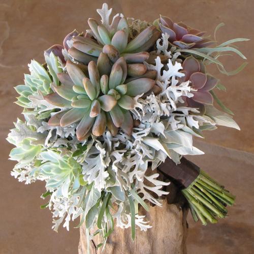 Hand-tied bridal bouquet with Echeveria 'Perle von Nurnberg', Echeveria 'Violet Queen', Pachyveria 'Blue Pearl' and dusty miller