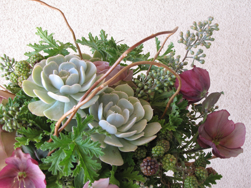 Close-up of garden style centerpiece with lavender hellebores, Amnesia roses, blackberries, mint green Echeveria 'Lucita', seeded eucalyptus, scented geranium, and curly willow