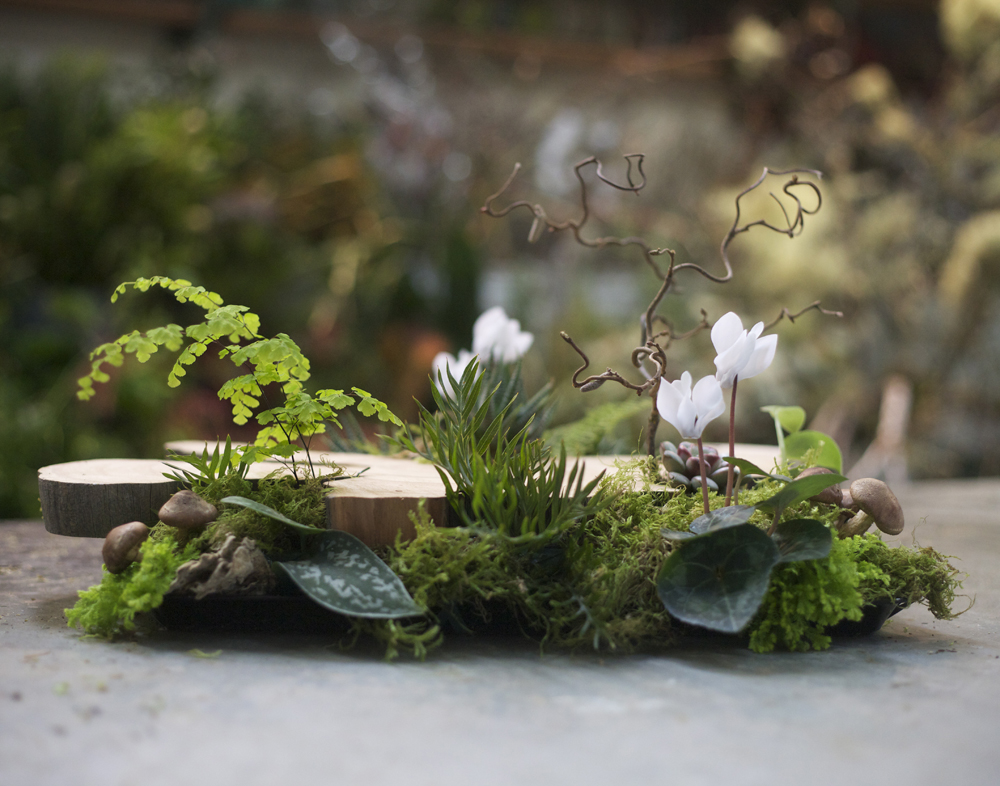 Woodland Centerpiece with a large wood slab from a Juniper tree, contorted filbert branch, white cyclamen, Haworthia fasciata, Graptoveria amethorum, Scindapsus pictus 'Philodendron Silver Cloud', Grevillea, sea star fern, maiden hair fern, mushrooms, sponge mushrooms and moss