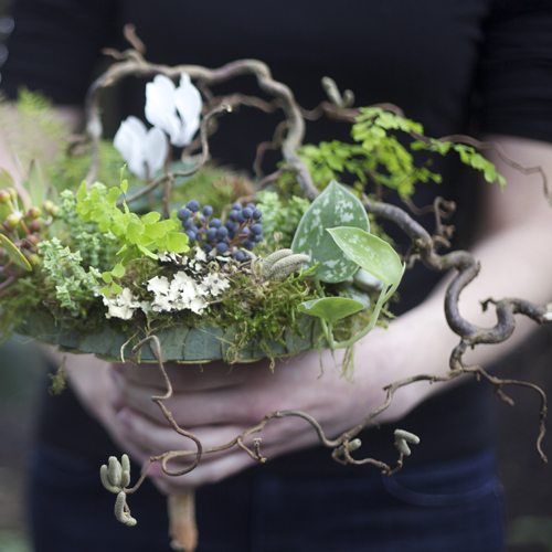 detail of woodland bridal bouquet with contorted filbert branches, privet berries, acacia foliage, pinecones, white cyclamen, green leucadendron, Philodendron 'Silver Cloud', sea star fern, maiden hair fern, seeded eucalyptus, Graptoveria 'Silver Star', Crassula rupestris subsp. marnieriana, sponge mushrooms, lichen and moss, with a eucalyptus and river birch bark handle treatment
