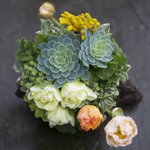 Bouquet with succulents, Crassula rupestris subsp. Marnieriana, ivory double tulips, peach poppies, yellow kangaroo paw, Italian mini variegated pittosporum and scented geranium with a birch bark handle treatment