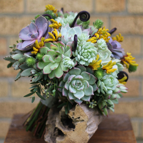 succulent bridal bouquet with uhule fern shoots, Echeveria 'Perle von Nurnberg', Echeveria deernbergii 'Painted Lady', Echeveria 'Lola', Echeveria pulidonis, Echeveria 'Ramillette', Echeveria 'Tippy', Kalanchoe tomentosa, Haworthia fasciata, magical green eryngium (thistle), seeded eucalyptus, gunnii eucalyptus and yellow kangaroo paws, for a ceremony in Cincinnati, Ohio