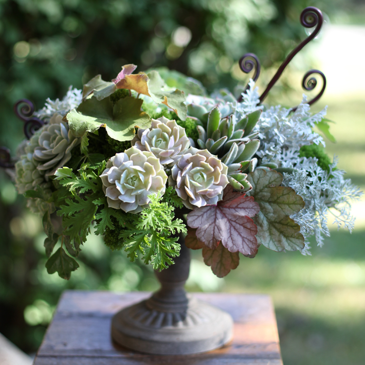 Centerpiece with fiddle head fern, Heuchera 'Vienna', Heuchera 'Caramel', Echeveria 'Lola', green hydrangea, Heuchera 'Lime Rickey', oak leaf ivy, scented geranium, Green Trick dianthus, green trachelium, Echeveria 'Tippy', Echeveria 'Lucita' Echeveria derenbergii 'Painted Lady', Kalanchoe tomentosa, Artemisia 'Powis Castle' and dusty miller, by Floral Verde LLC in Cincinnati, OH.
