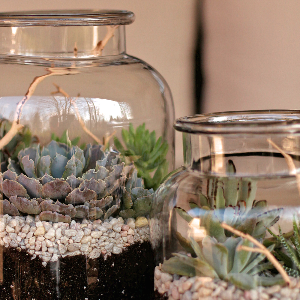 Succulent terrariums with Echeveria, Haworthia, Kalanchoe and manzanita branches by Floral Verde LLC, Cincinnati, Ohio