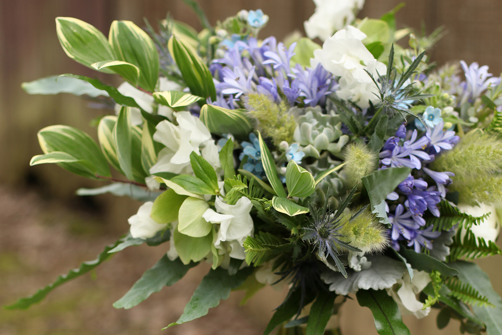 asymmetric bridal bouquet by wedding florist Floral Verde LLC in Cincinnati, Ohio; with succulents, white Japanese sweet pea, white peonies, blue agapanthus, blue tweedia, eryngium, dusty miller, gunnii eucalyptus, blue star fern, Echeveria 'Topsy Turvy', bunny tail grass, Kimberly Queen fern, kangaroo fern, green helleborus and variegated Solomon's Seal.