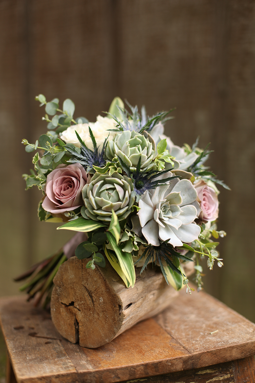 bridesmaid bouquet by wedding florist Floral Verde LLC in Cincinnati, Ohio; with succulents, Amnesia roses, Echeveria 'Lilacina', Echeveria 'Lola', thistle, White Majolica spray roses, gunnii eucalyptus, mini variegated pittosporum and variegated Solomon's Seal.