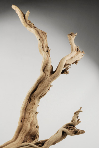 Ghost Wood Branch