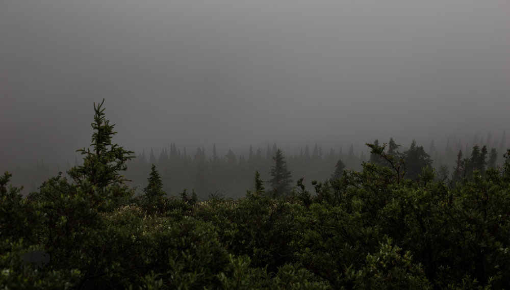 Not much to see but layers of trees.