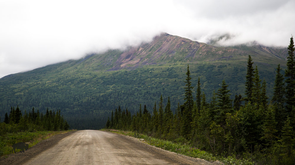 First views of the Denali Highway.