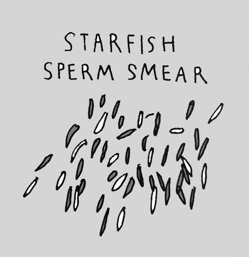 starfishedit.jpg