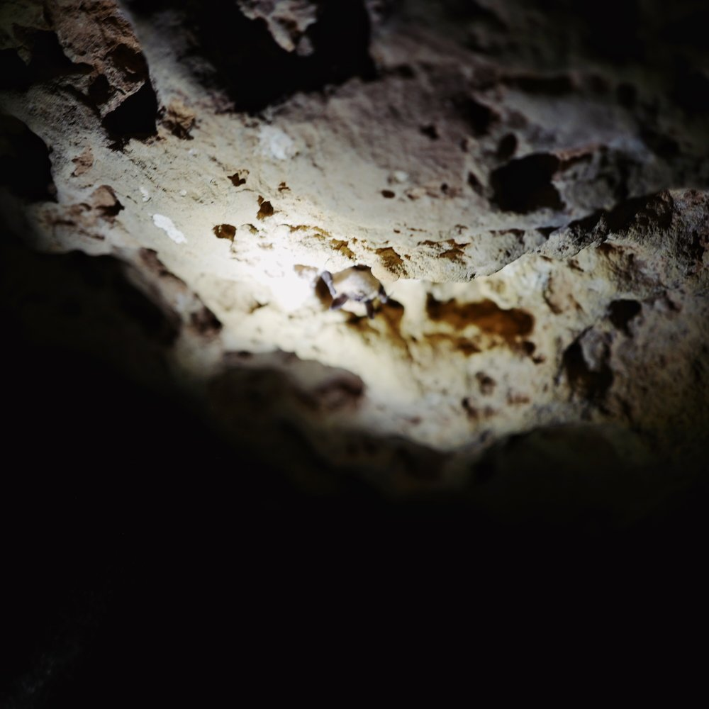 Bat inside the cave