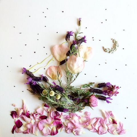 lavendershipFloraforager.jpg