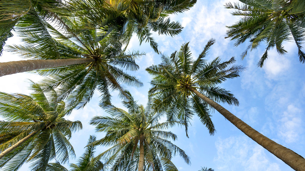 palm-trees-3058728_1920_Edited.jpg