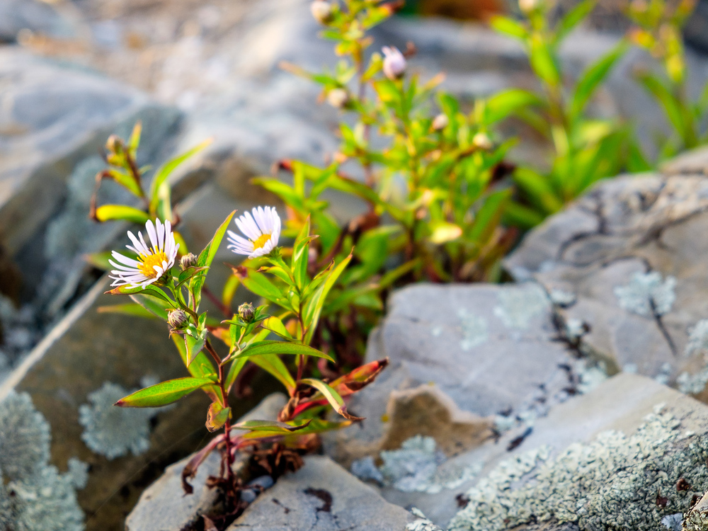 Blooming in the Rocks