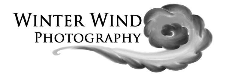 Winter Wind Photography