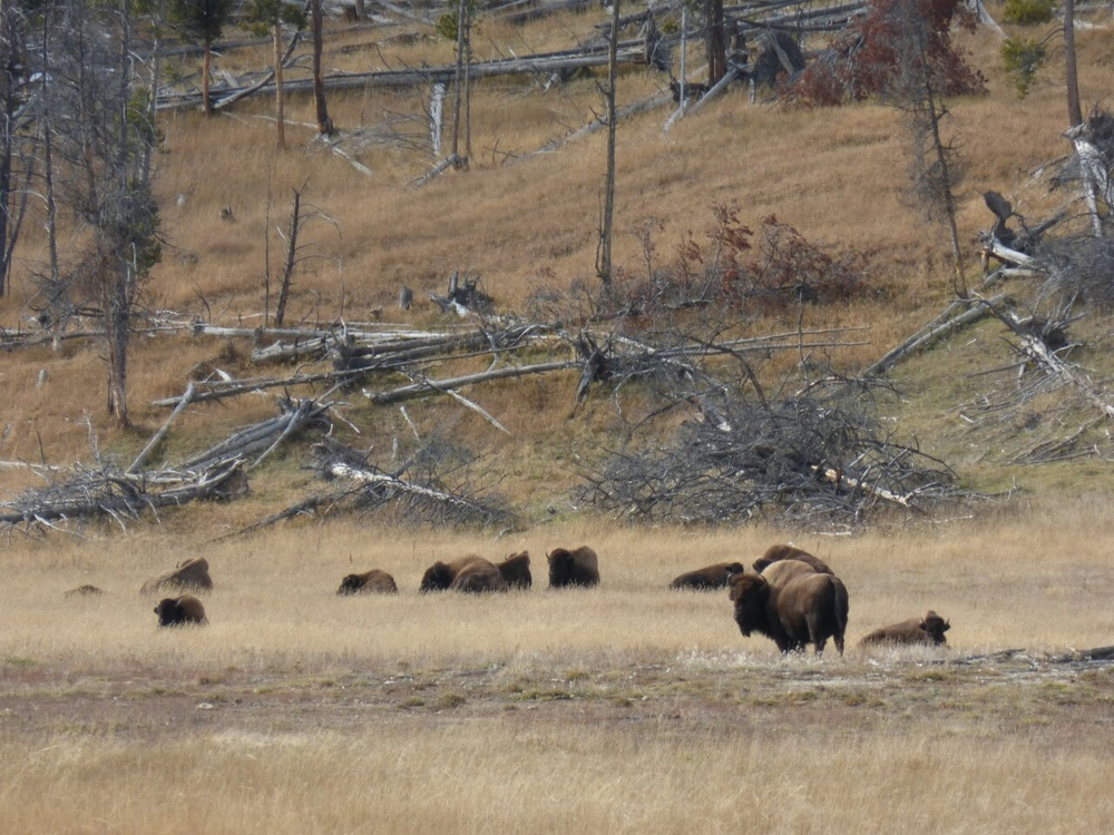 More of Yellowstone's inhabitants