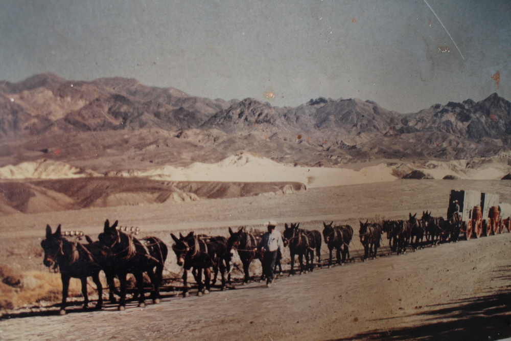 Horse vs Mule? There was a wagon race from here to Los Angeles won by the mules. There was cheating though - the wagons were collapsible and were taken apart when going through the mountains. Too bad there wasn't any reality TV back then!
