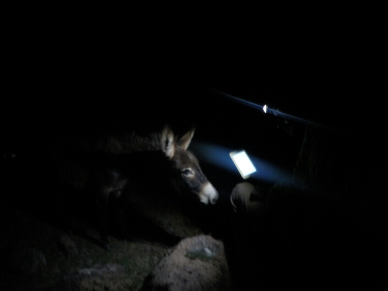"""Wait... you are putting this on instagram?""-starring the headlamp, tablet and a burro."