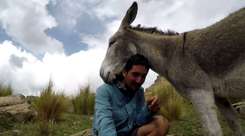 under the sun and under the burros