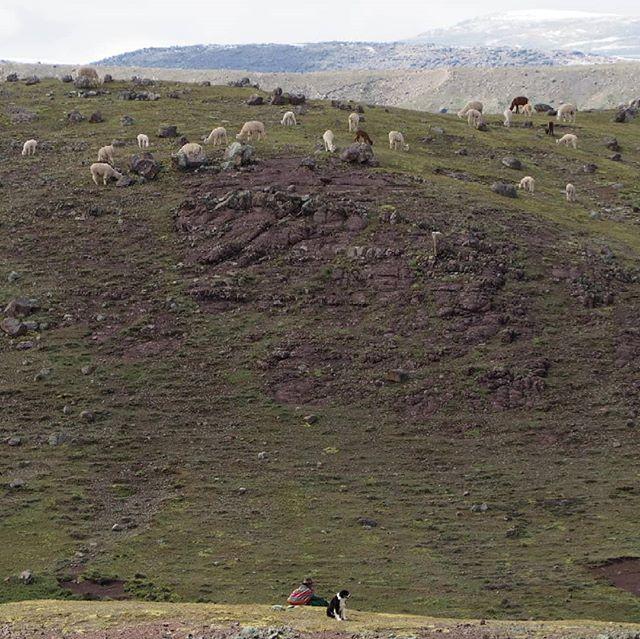 Life of a shepherd