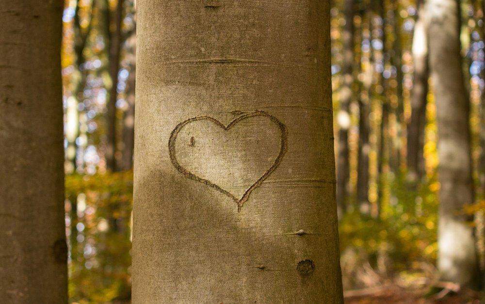 heart-1788493_1920.jpg