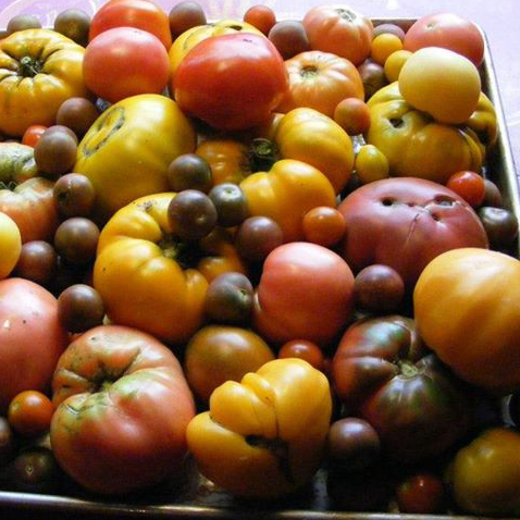 Heirloom tomatoes in August.