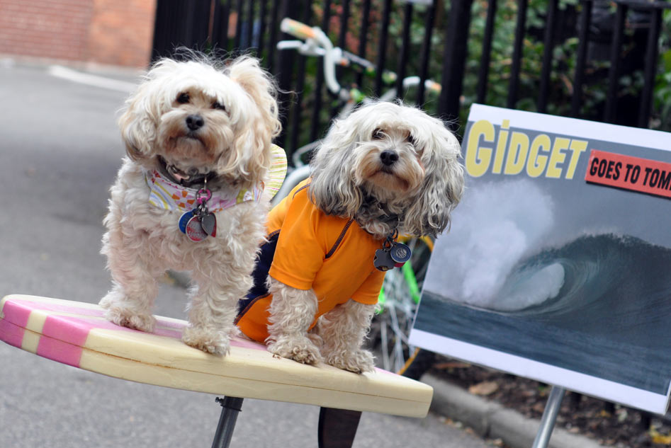"Fifi Gigi & Meteor on their surfboard take First Prize: ""Spirit of the East Village"" as ""Gidget Goes to Tompkins"""