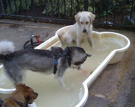 One of 3 pools for the dogs to cool off in during the summer