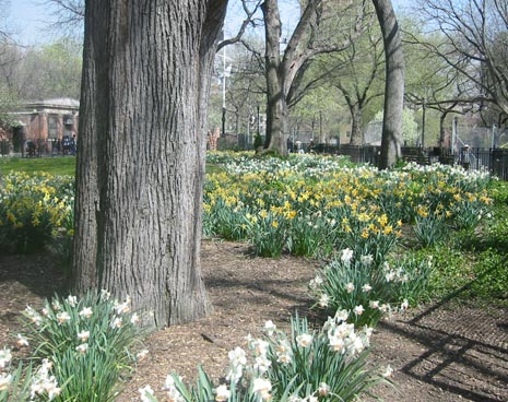 Spring comes to Tompkins Squre park