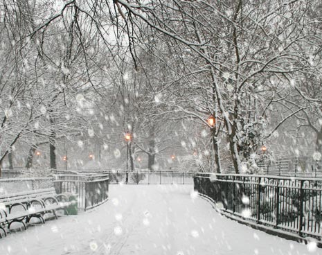 Tompkins Square in the snow storm