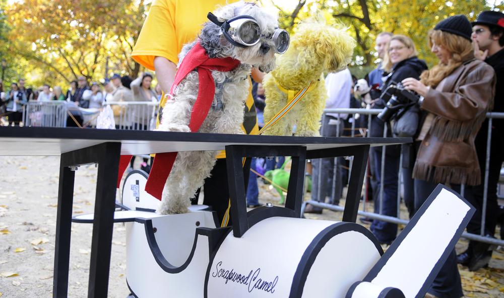 TSQ Halloween Dog Contest - Kreizel 019.JPG