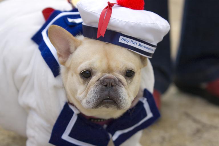 Halloween Dog Parade - Kreizel 123  .jpg