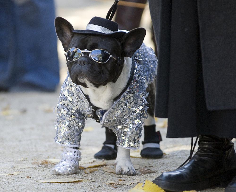 TSQ Halloween Dog Contest - Kreizel 007.JPG