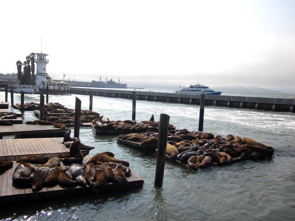 Pier Nap Time