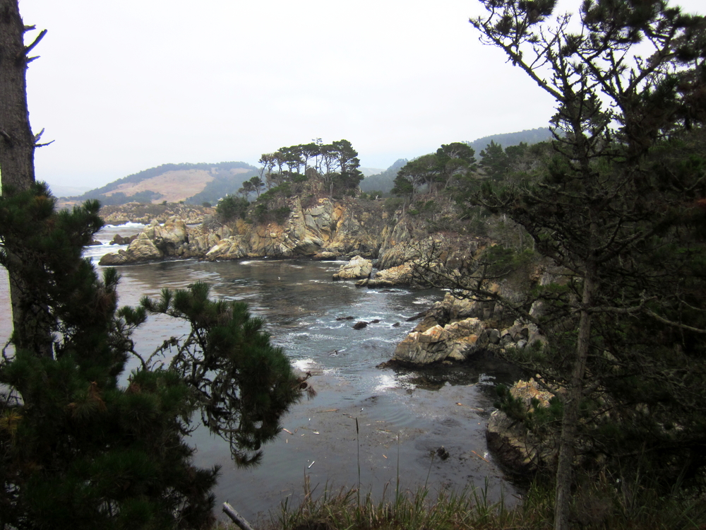 Take a Hike!  (Point Lobos)