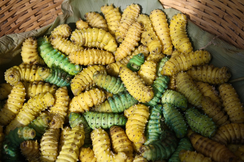 basket of edible silk worm.jpg