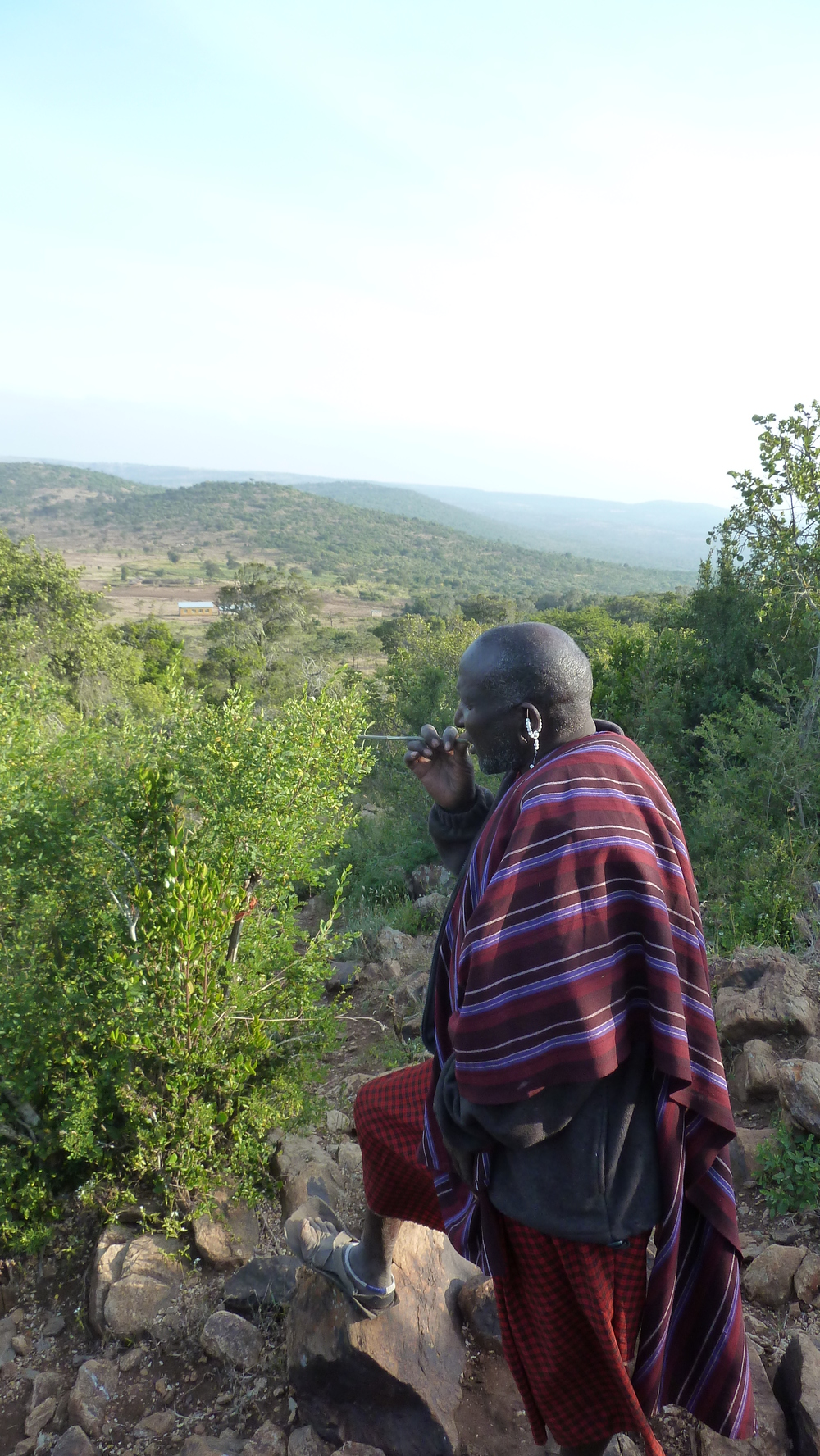 A Maasai elder chewing a twig from a tree nicknamed 'the toothbrush tree' during an expedition to find medicinal plants.JPG