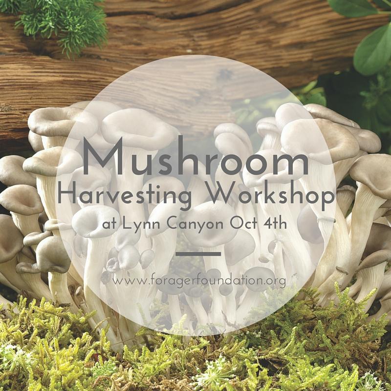 Forager Foundation Mushroom Harvesting Workshop October Vancouver