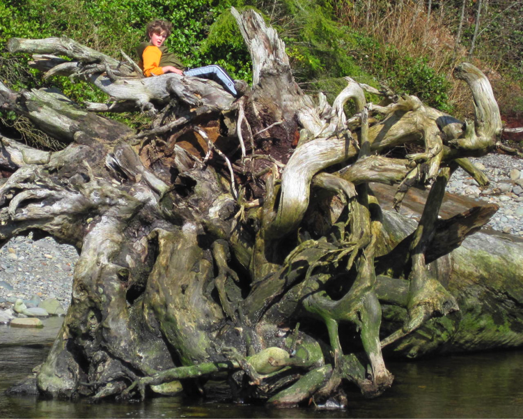 A member of the Victoria Young Naturalists' Club relaxes in a nest of roots (Photo Young Naturalists of BC)