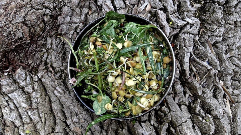 Wild harvested salad