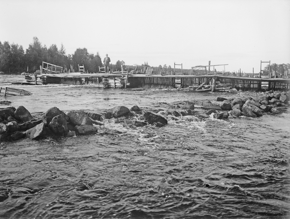 A traditional salmon trap on river Pielisjoki from early 1900s. Selkie villagers, located on the river Pielisjoki proximity, harvested this unique lake-bound atlantic salmon, a relic of the ice age, prior to the establishment of the hydroelectric stations in the 1960s (Photo National Board of Antiquities)