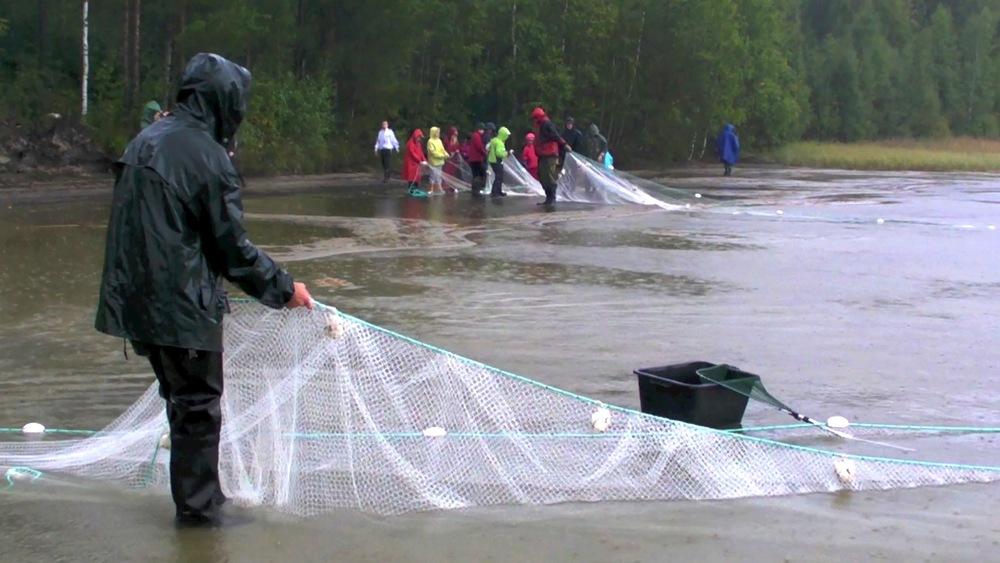 Video still from a student film documenting the Selki school seining on lake Ylinen (Photo Minna Kilpeläinen)