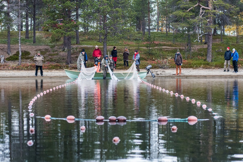 Seining during the Festival of Northern Fishing Traditions in the village of Sevettijärvi, Skolt Sįmi area, Finland (Photo Chris McNeave)
