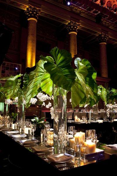 elephant palms.jpg