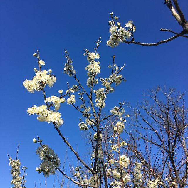 Spring at the Warren. 1) Plum tree, 2) peach tree, 3) honeybee.