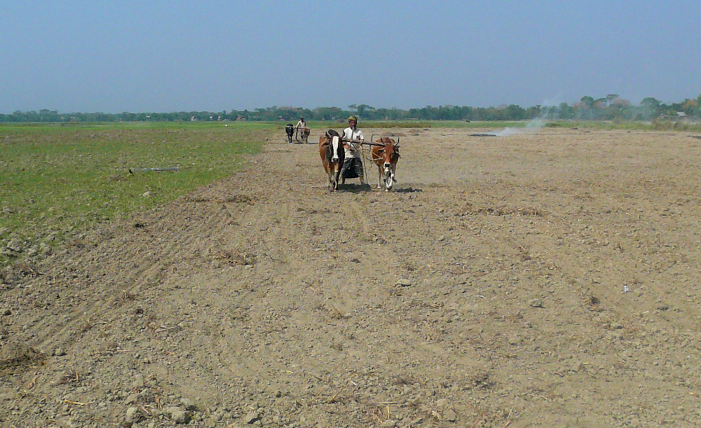 Figure 7: Residents of Char Bilashpur preparing a dried field for the rice growing season (Rivera, 2010).