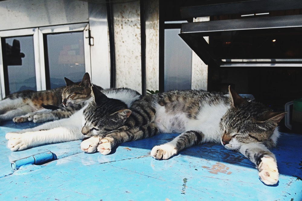 Cats sleeping in Jiufen, Taiwan
