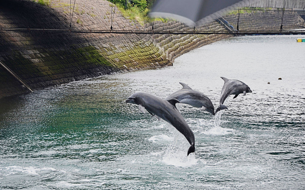 Dolphins in the canal.