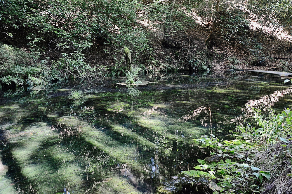 Clear waters at Ikeyama Suigen freshwater spring