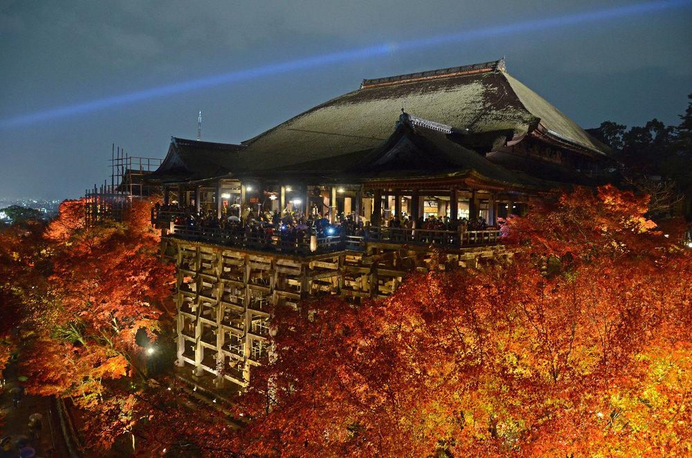 Kiyomizudera's fall leaves illuminated at night - [  BUY PRINT   - Enter KYOTOFALL for 10% off]
